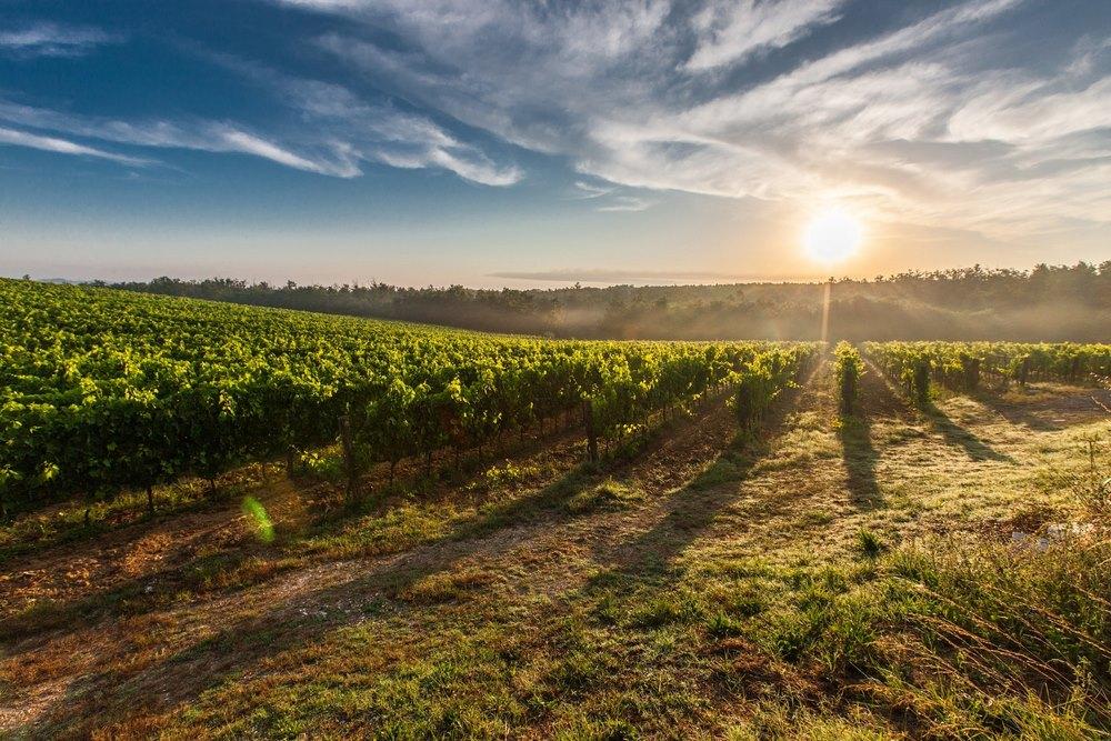 Французская классификация вин